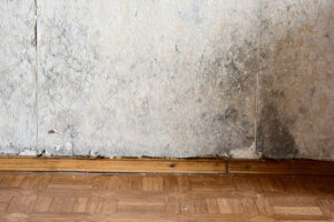 mold buildup - orange county mold inspection