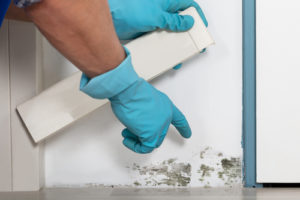 Cleaning moldy wall - Aliso Viejo water damage and mold