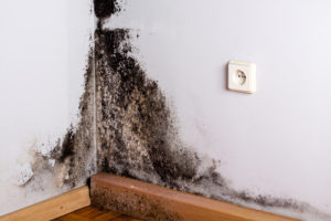 local mold removal experts