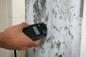 mold detection services
