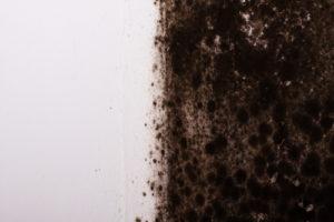 mold remediation definition