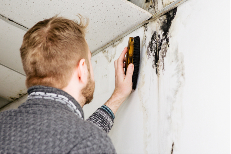 water-damage-mold-repair