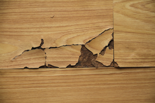 Can water damage wood floors