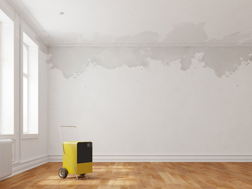 How long does it take for mold to grow in wet drywall
