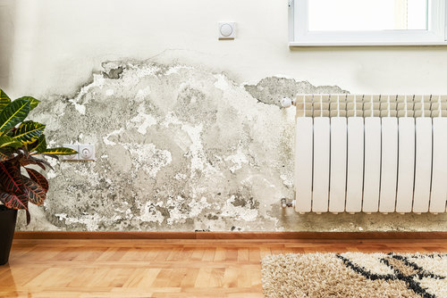 How can I maximize my water damage claim