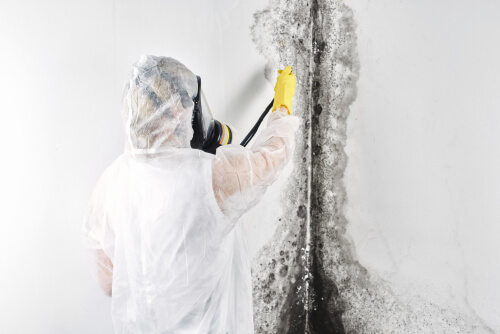 How do you know mold is making you sick