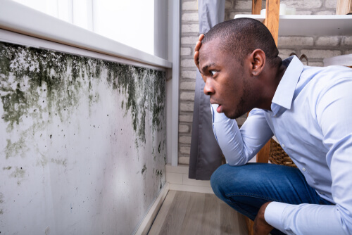 What are signs of mold in your house