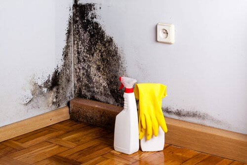 Can mold be completely removed from a house