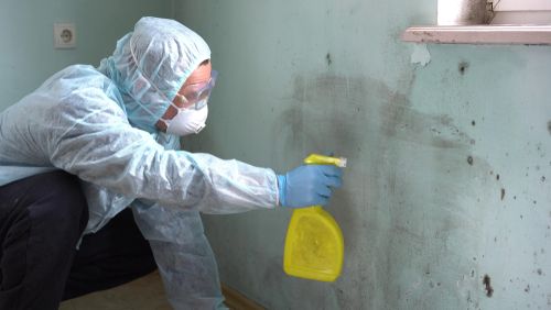 What happens after mold removal and remediation